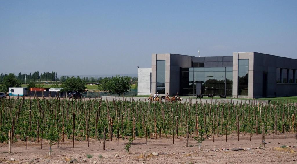 Вид современного виноградника