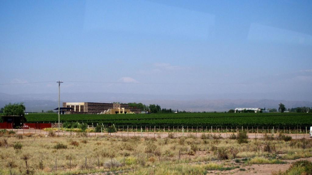 Пампа и виноградник