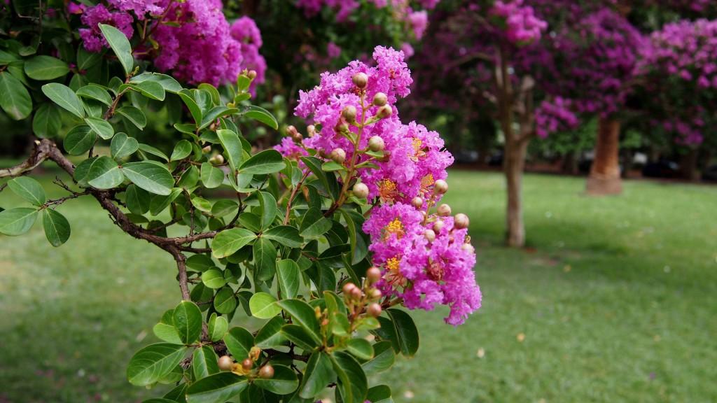 Цветы в парке.