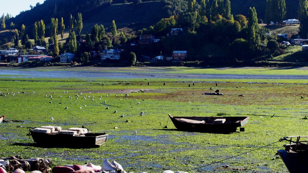 Лодки, отлив, птицы