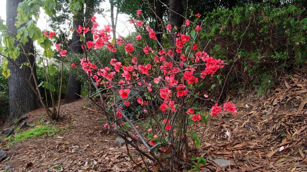 Красные цветы на холме Сан Кристобаль