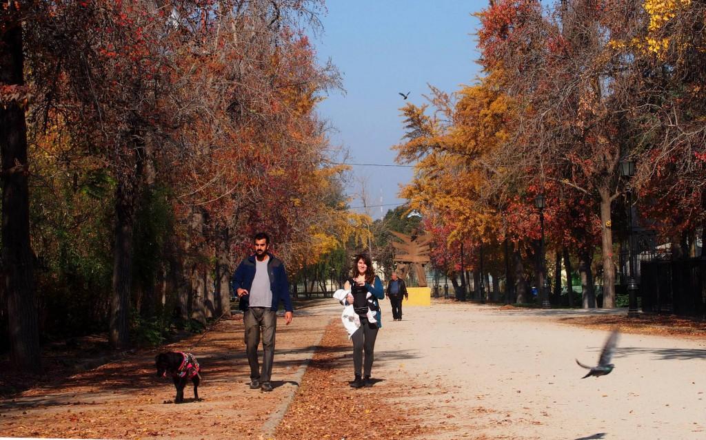 Прогулка собачки в парке осенью