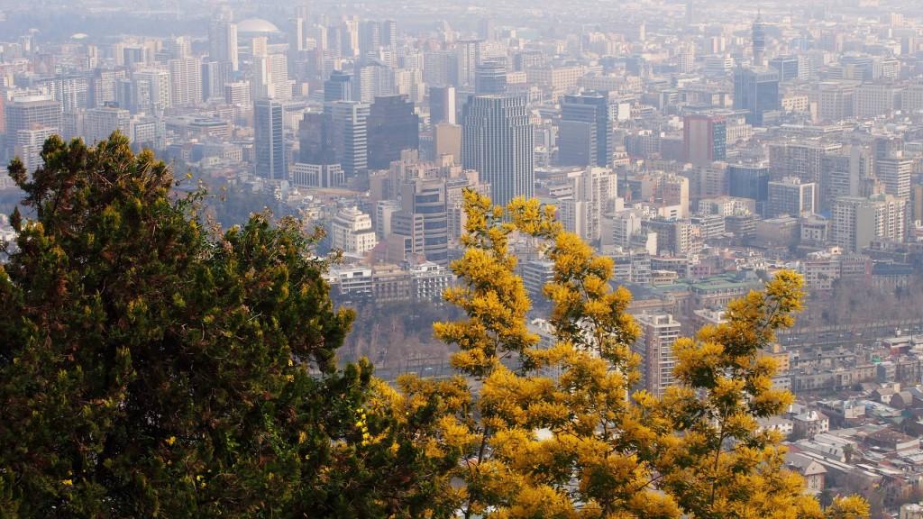 Акация на холме Сан Кристобаль - взгляд на деловой центр города